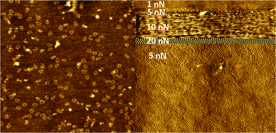High resolution imaging with Soft IC on (a) 50 nm dna rings and (b) PS/PMMA block copolymer with 38.6 nm spacing
